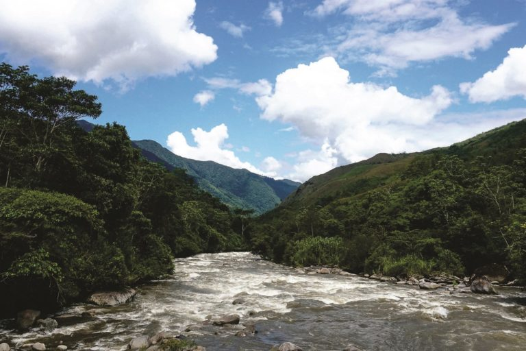Cincuenta mil hectáreas de los bosques de Carpish han sido destinados para la nueva área de conservación regional. Foto: NCI.