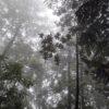 Bosque secundario de niebla, Veracruz, México