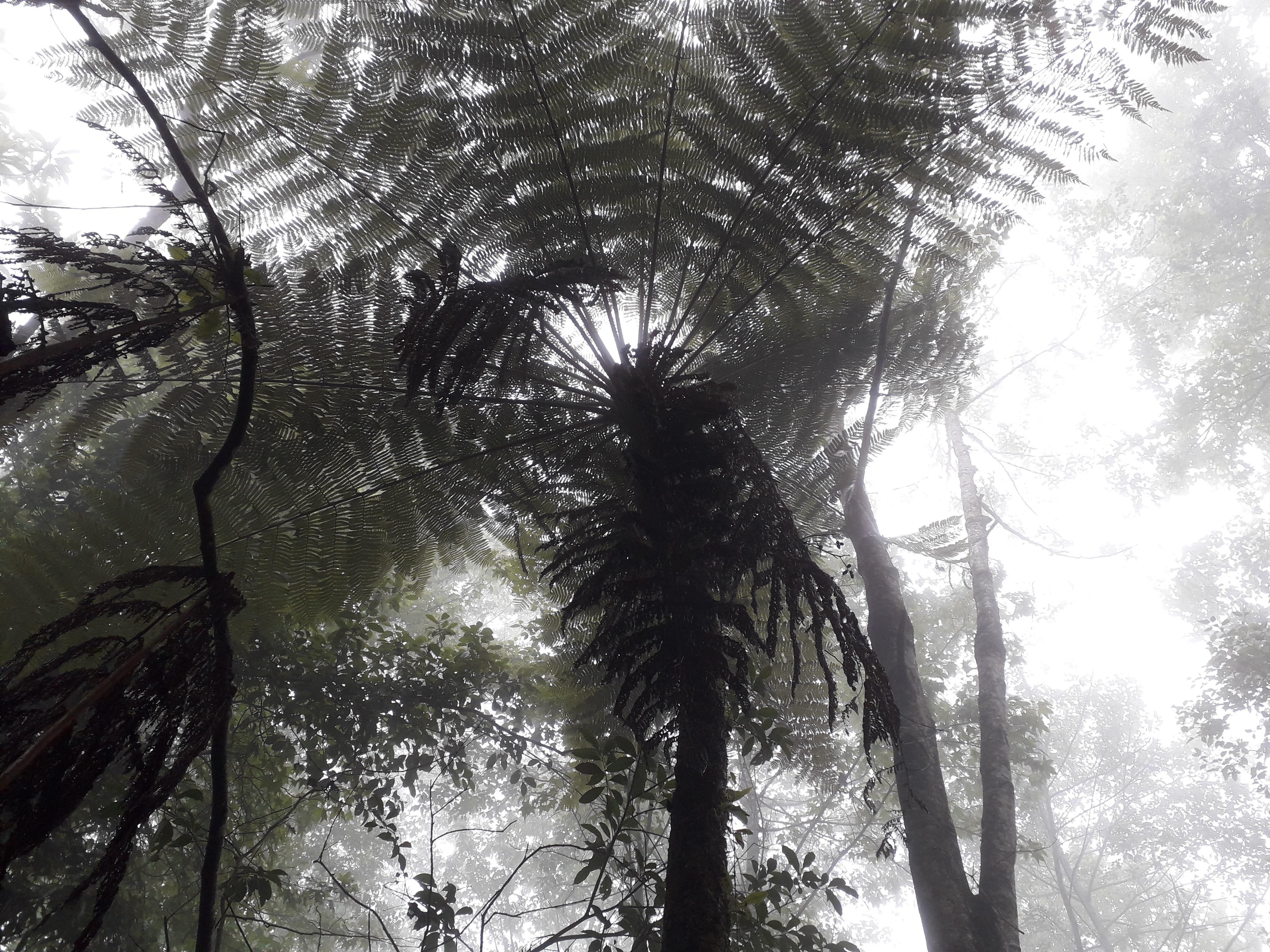 Bosque de niebla secundario, Veracruz, México