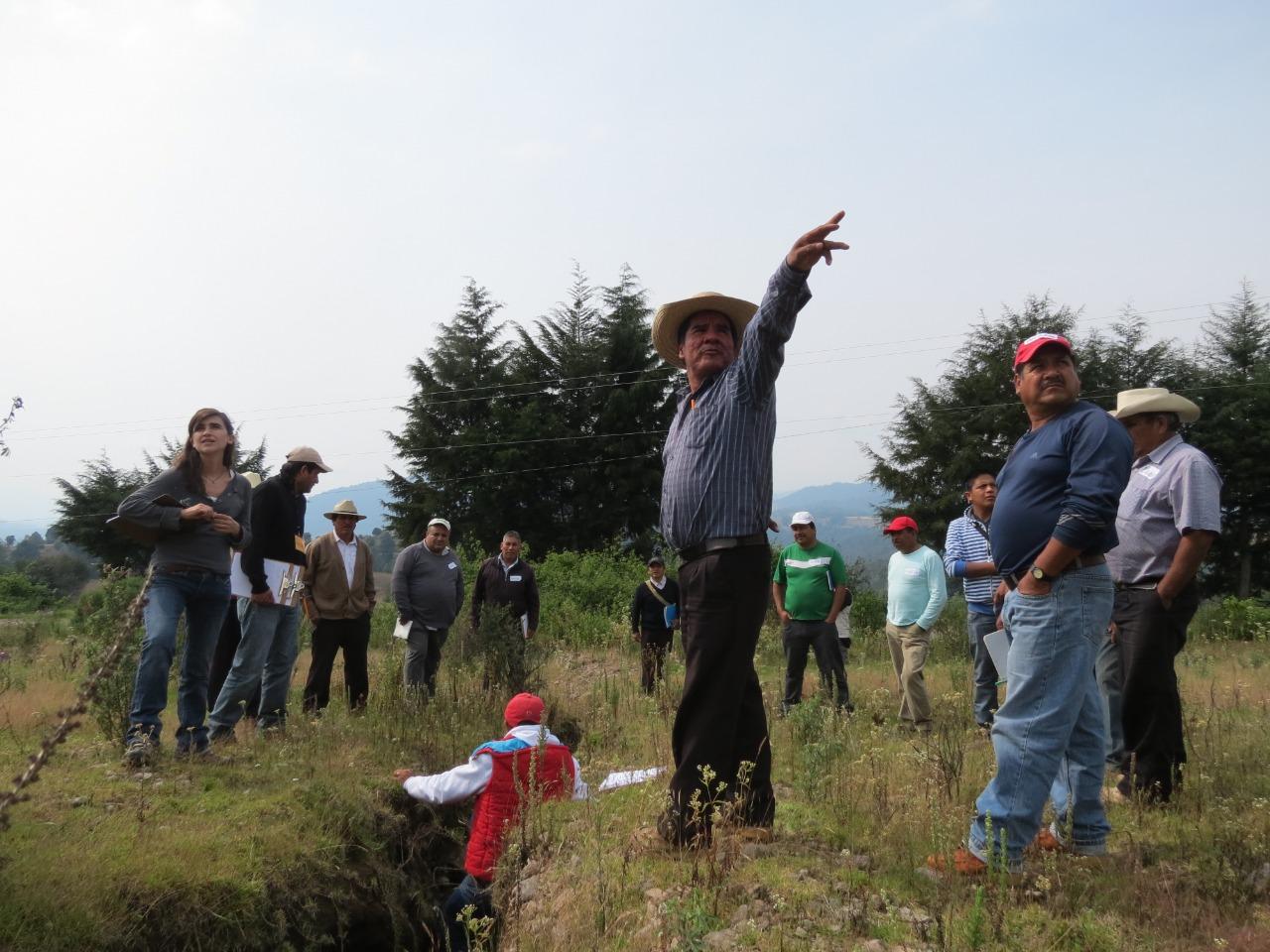 Manejo Forestal -Comunidad Rincón de Guadalupe, municipio de Amanalco, Estado de México