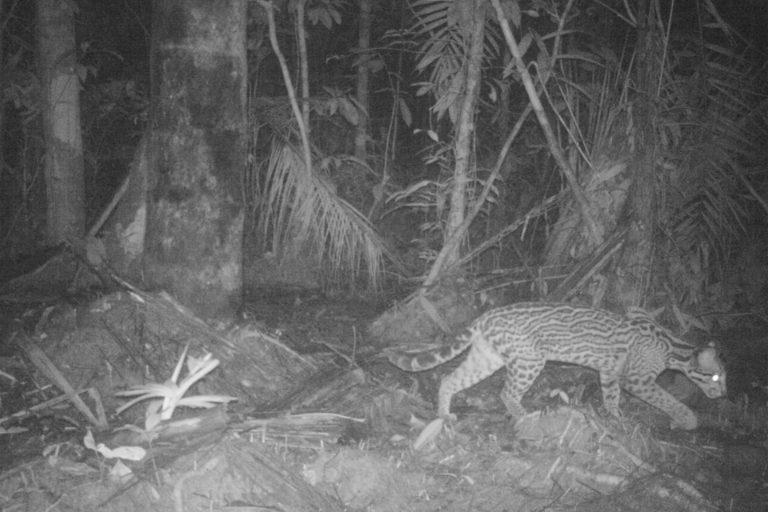 Varias especies de primates alberga el Parque Nacional Yaguas. Foto: SZF.