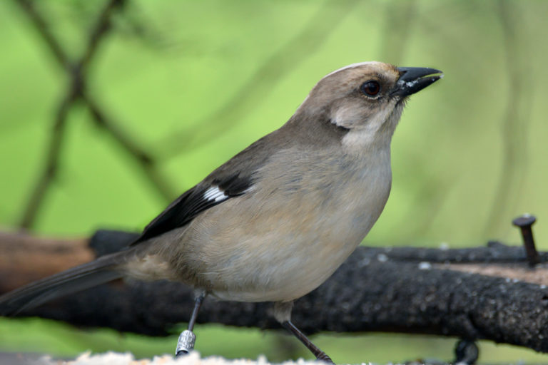 Conservación de aves. La expansión de la frontera agrícola, ganadera y urbana en El Valle de Yunguilla ha restringido el hábitat del matorralero a la reserva. Foto: Fundación Jocotoco.
