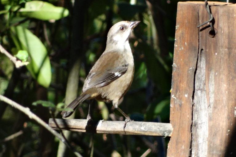 Conservación de aves. En los meses de marzo y abril se realiza el censo del ave. Esta coincide con su época reproductiva. Foto: Fundación Jocotoco.