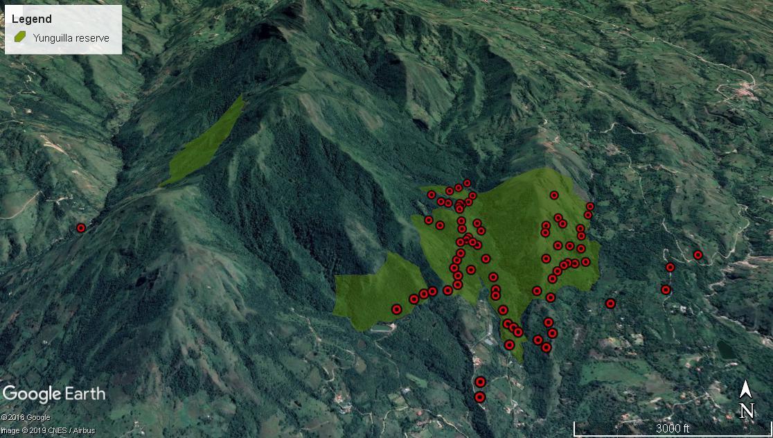 Conservación de aves. La figura muestra los puntos de monitoreo del matorralero en la reserva de Yunguilla en 2019. Los puntos rojos representan cada observación del ave dentro y fuera de la reserva. Mientras que el área protegida está representada por los polígonos verdes. Fuente: Fundación Jocotoco