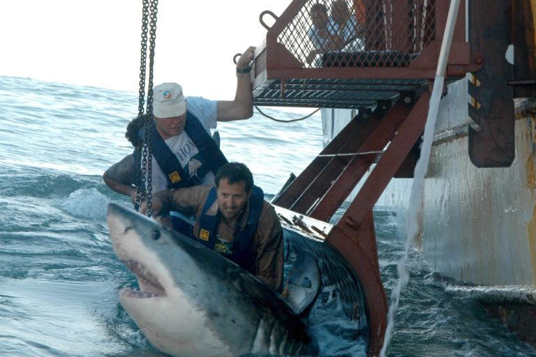 Investigador mexicano Ramón Bonfil-tiburones