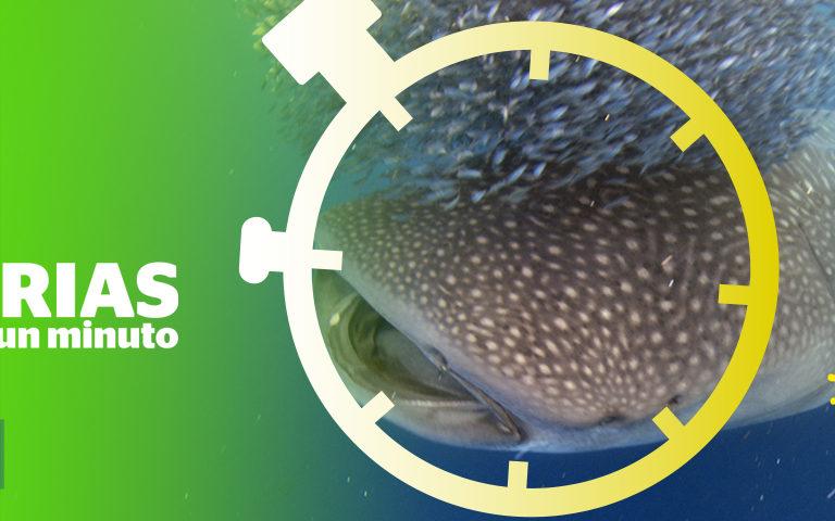 Foto: Centro de Investigación para Tiburones.