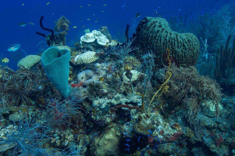 Arrecife de coral mesoamericano