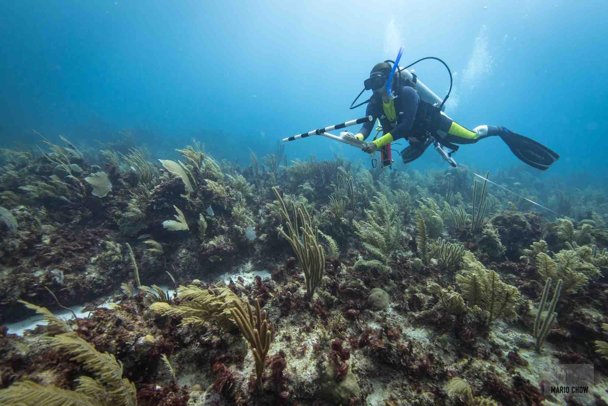 Monitoreo de la salud del sistema arrecifal mesoamericano