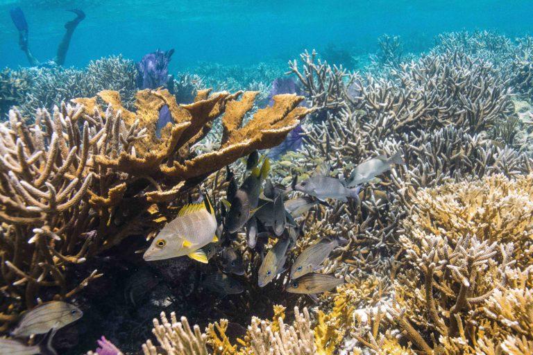 Arrecife Mesoamericano-Belice