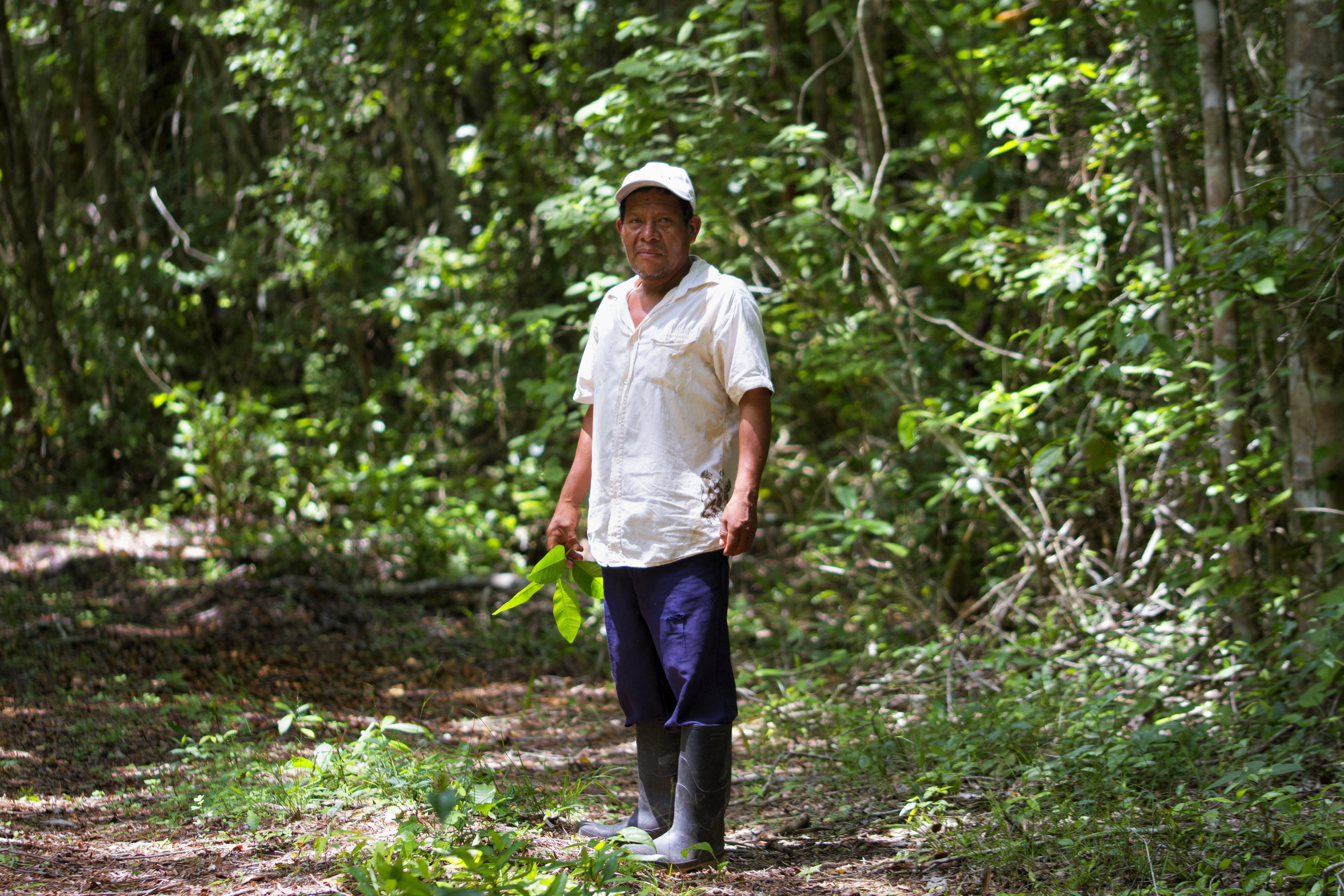 Acahual en Ejido Nuevo Becal, Quintana Roo