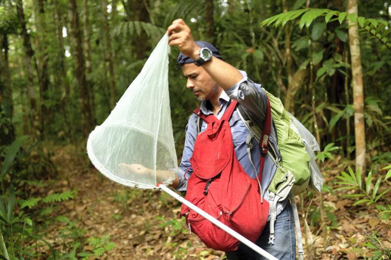 Insectos y mariposas. Efraín Henao es uno de los entomólogos que más conoce de mariposas en Colombia. Foto: Efraín Henao.