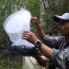 Insectos y mariposas. Preparando las trampas Van Someren Rydon con las que captura a las mariposas. Foto: Efraín Henao.