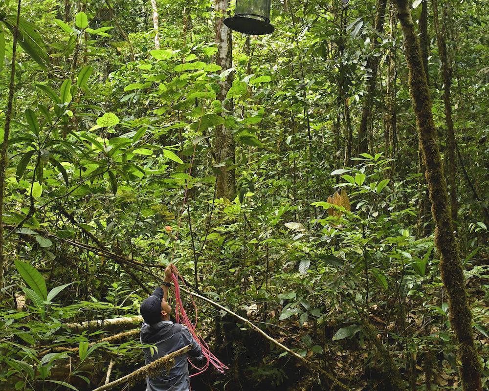 Insectos y mariposas. Trampas para mariposas en el bosque. Foto: Efraín Henao.