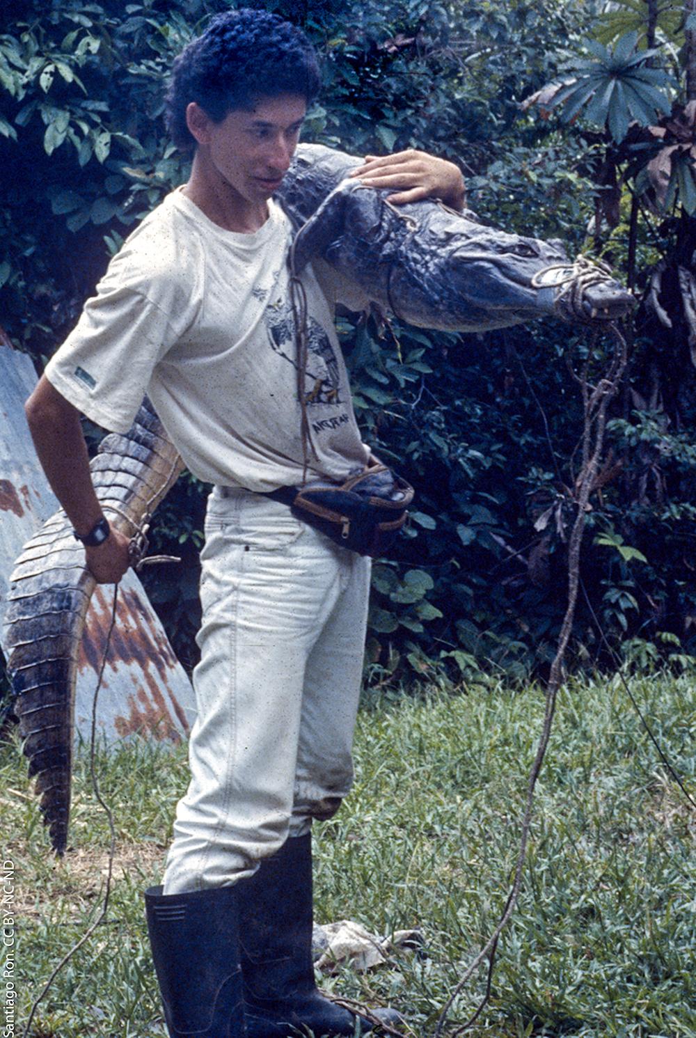Caimanes en la Amazonía. El biólogo Santiago Ron con una babilla capturada en 1994. Foto: Santiago Ron.