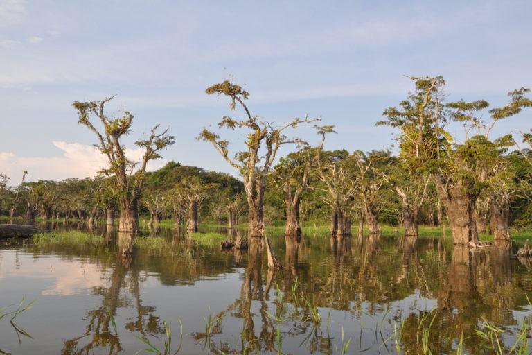 Caimanes en la Amazonía. Laguna Mateococha en la Reserva Cuyabeno. Foto: Diego Ortiz.