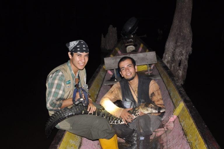 Caimanes en la Amazonía. Las capturas de caimán se realizan en las noches. Foto: Diego Ortiz.