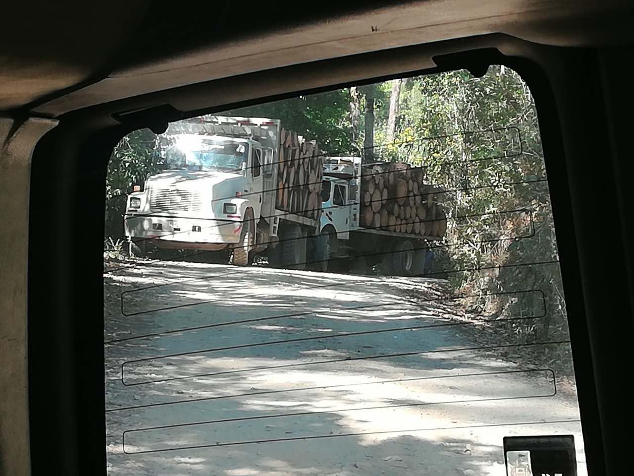 Tala ilegal en Talpa de Allende, Jalisco.