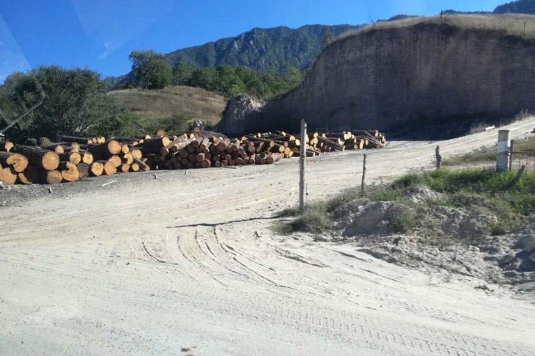 Bosque de arce de Talpa, en Jalisco, México