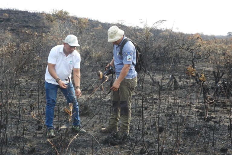 Incendios en la Amazonía. Funcionarios de Cormacarena inspeccionan los sitios de los incendios para evaluar el daño ambiental. Foto: Cormacarena.