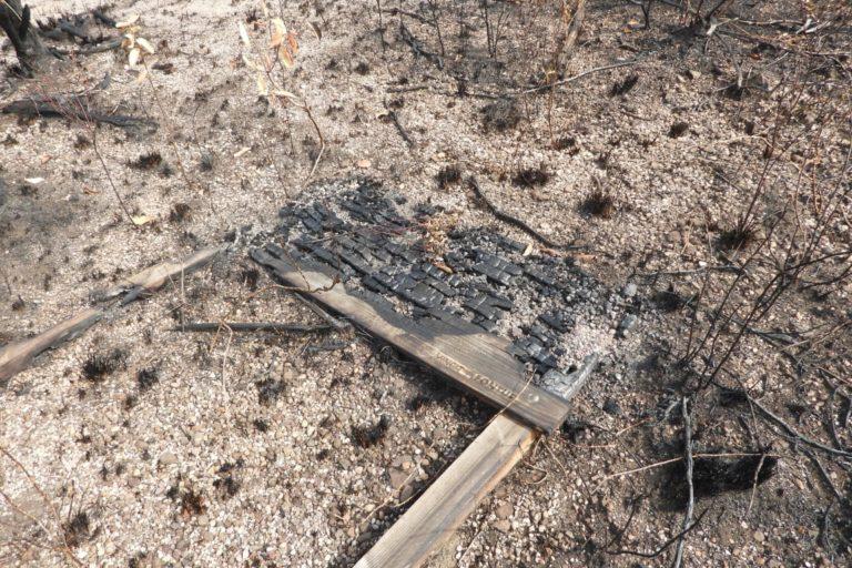 Incendios en la Amazonía. Se necesitarían al menos 20 años para que la zona incendiada se recupere. Foto: Cormacarena.