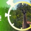 Composición en base a la imagen de un guanaco en el Chaco. Foto: Fundación Natura Bolivia.