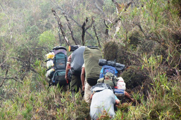 Expedición del año 2012 en el Santuario Nacional Cordillera de Colán, región Amazonas, donde se ubicó una de las tres especies endémicas. Foto: Fernando Angulo.