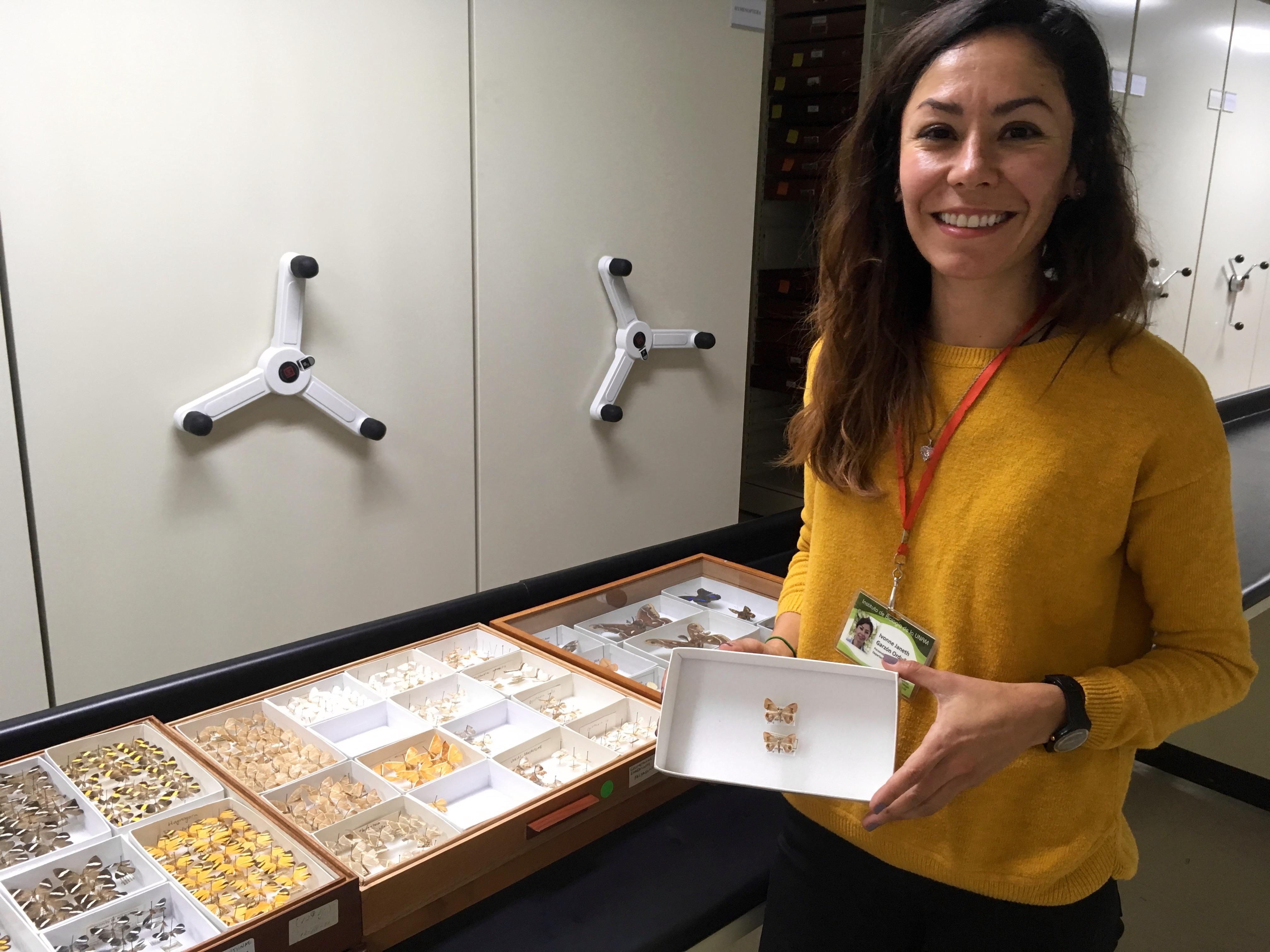 Ivonne Garzón, especialista en lepidópteros