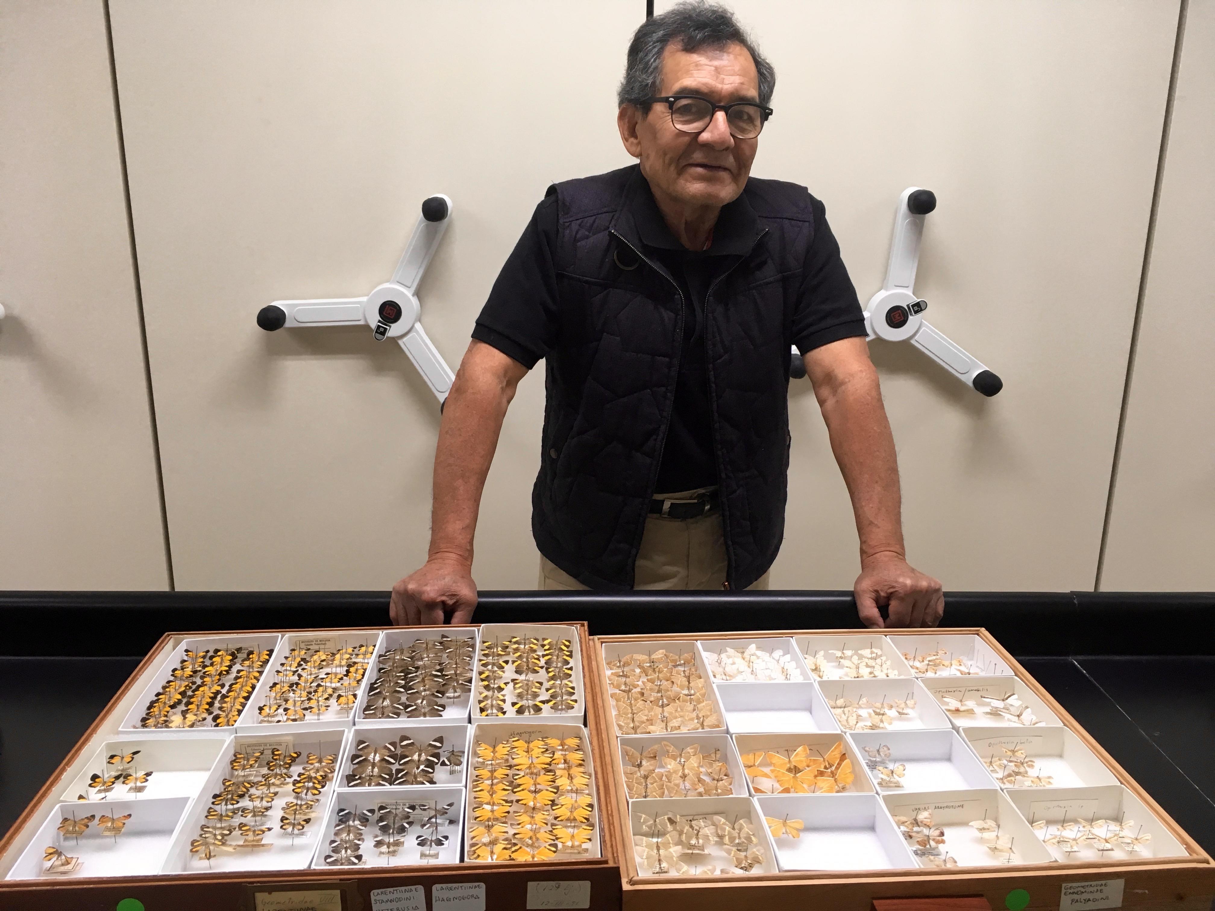 Técnico Adolfo Ibarra, Colección Nacional de Insectos de la UNAM