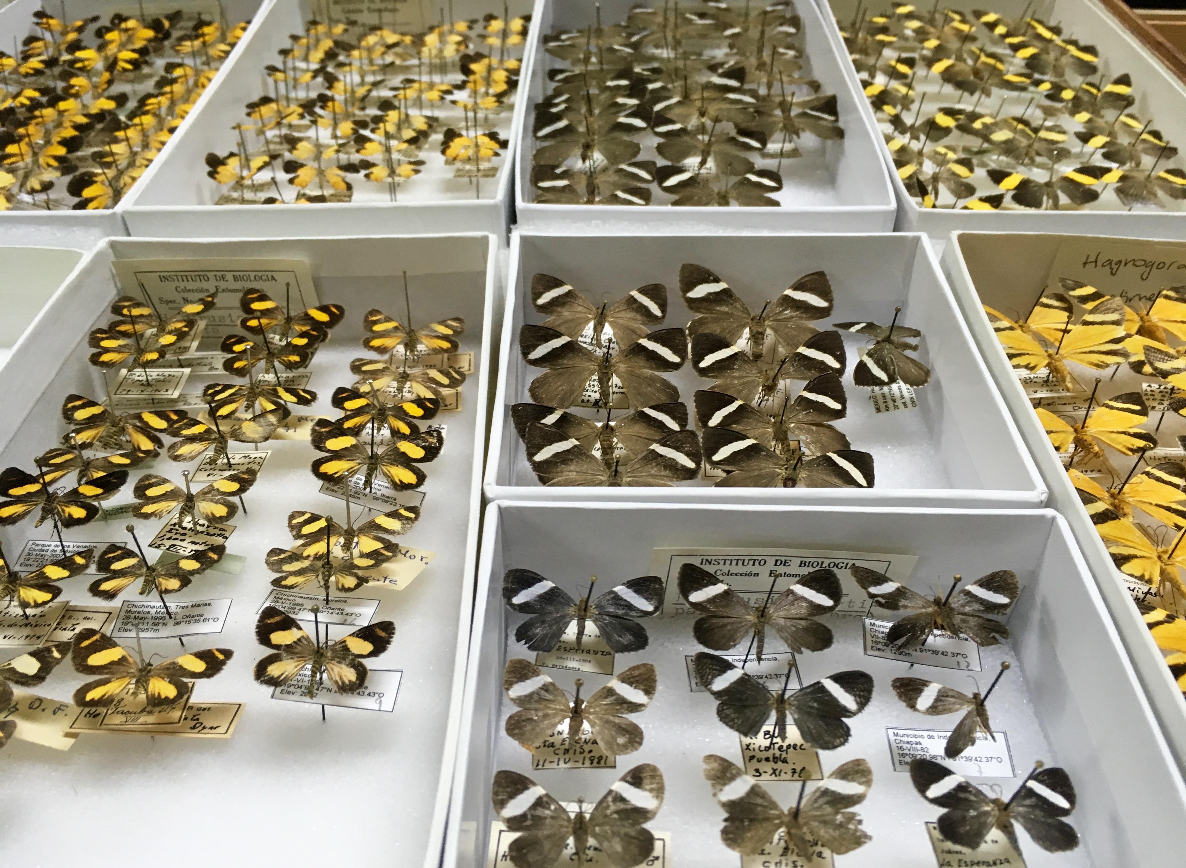 biodiversidad de polillas