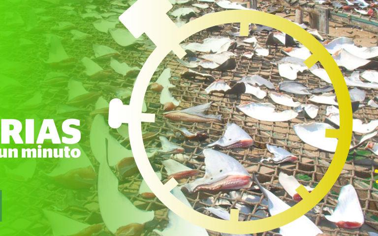 Composición a partir de una foto de un secadero de aletas de tiburón.Foto:Oceana