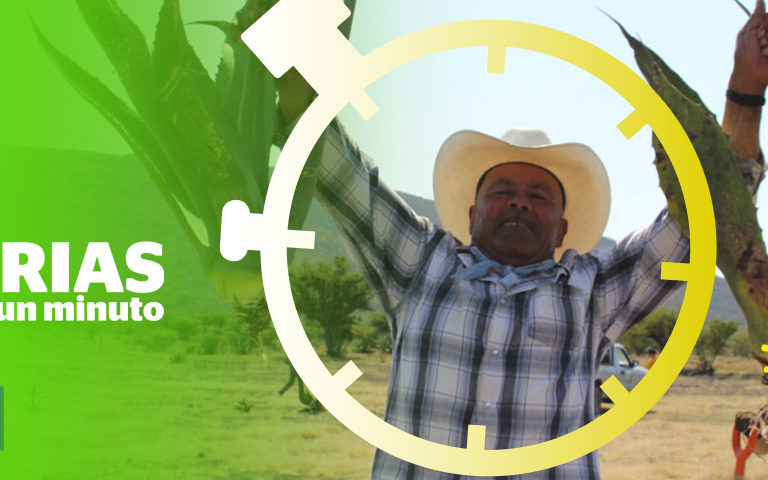 """Composición a partir de una imagen del artículo """"México: el secreto de un proyecto que restaura ecosistemas golpeados por la deforestación"""". Foto: Tracy L. Barnett"""