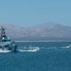 Ataques en el Golfo de California-Vaquita Marina
