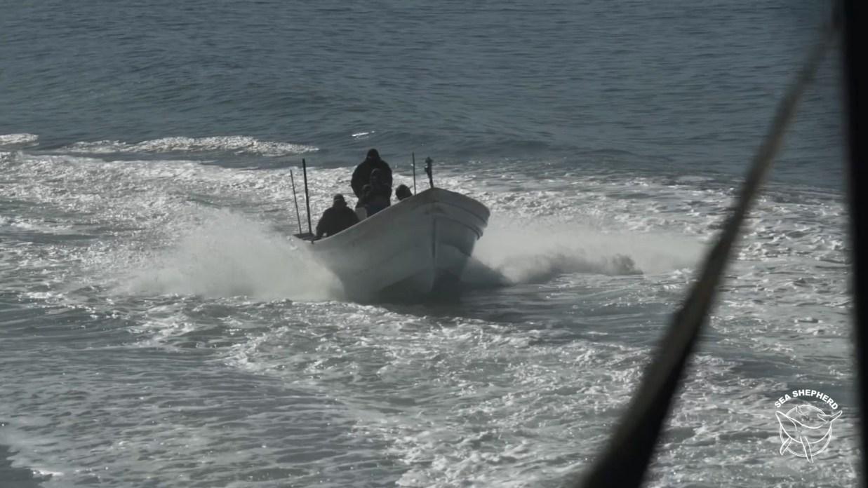 ataque de pescadores ilegales en Golfo de California