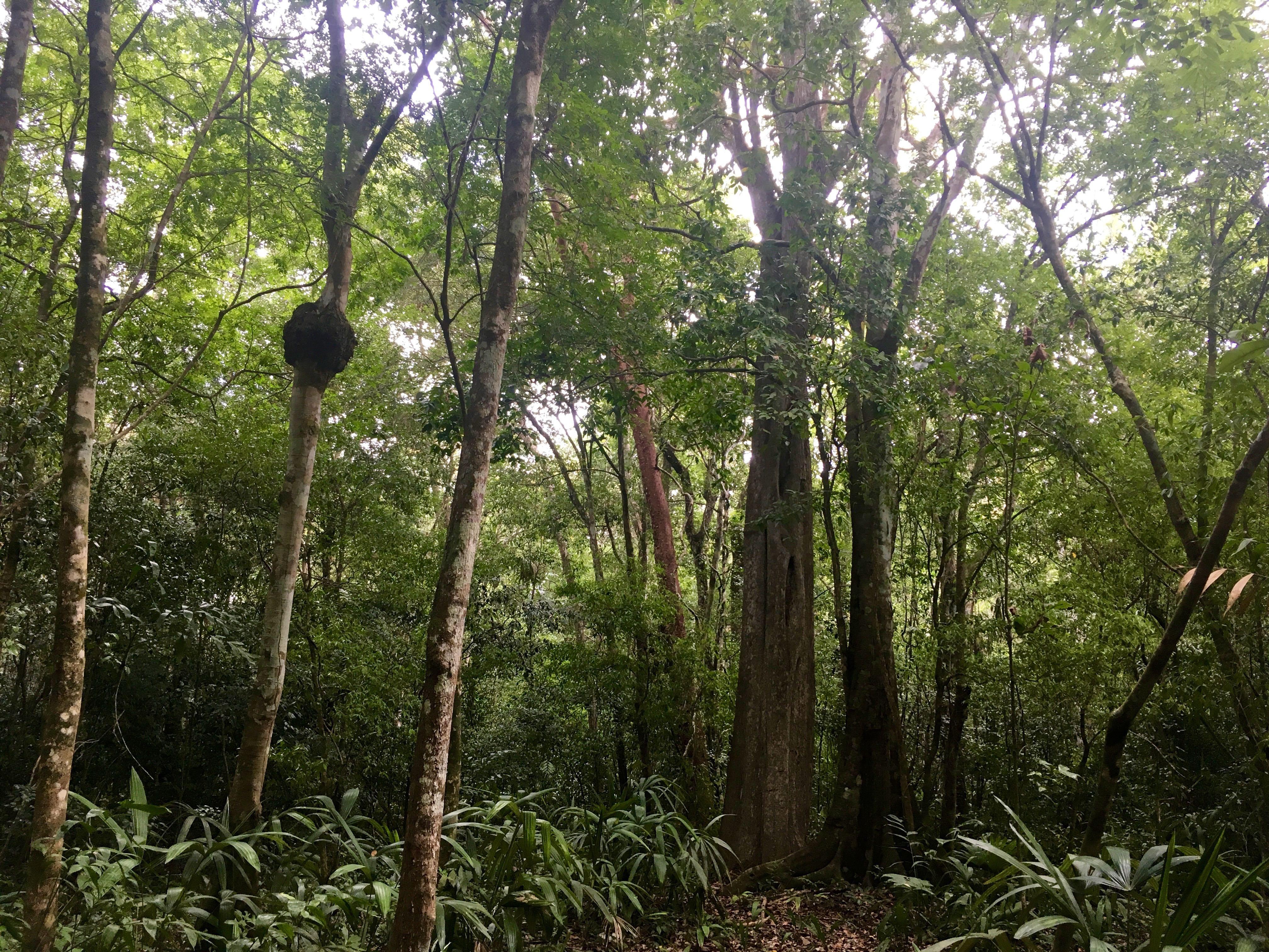 Selva-laguna OM