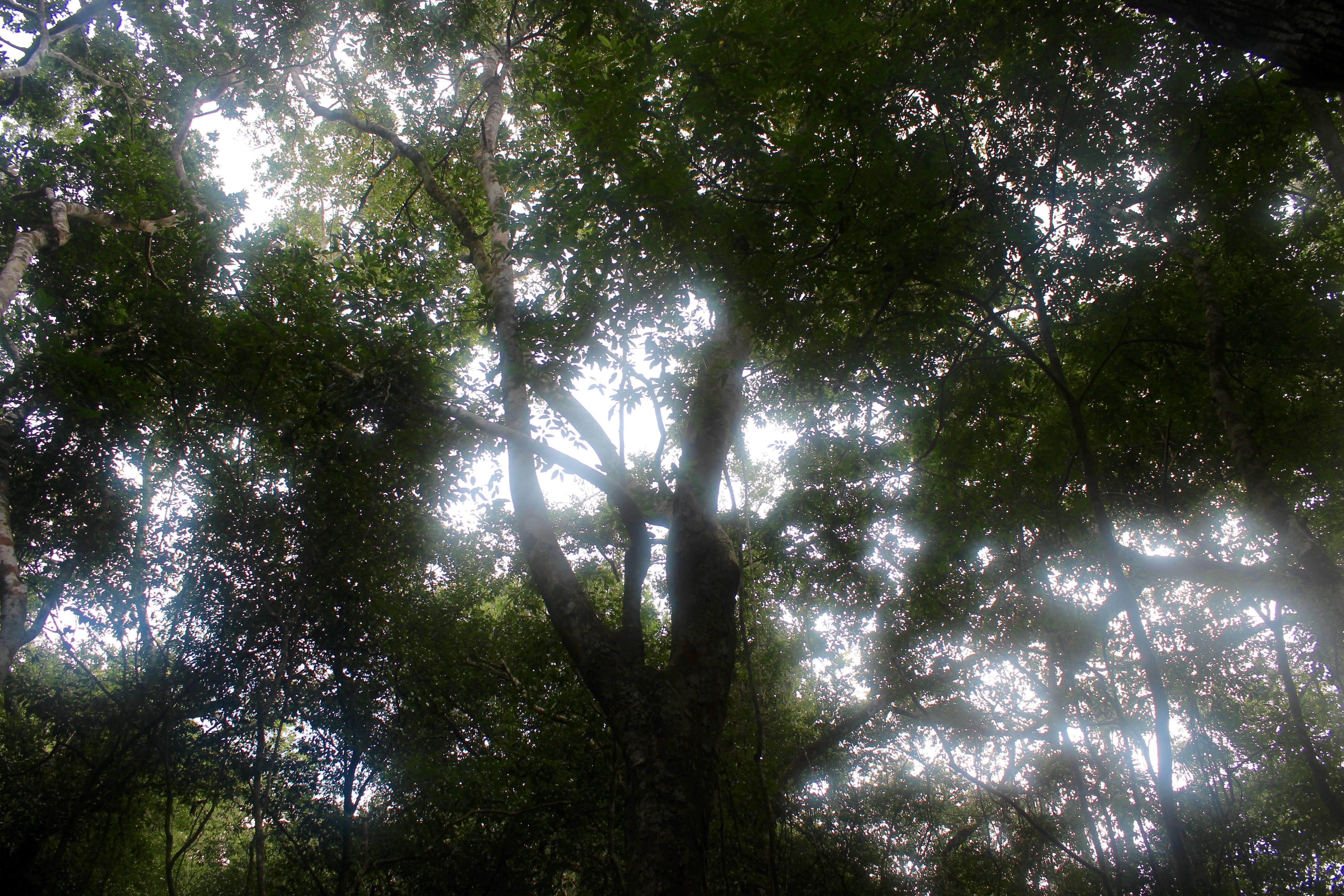 Selva Maya en Latuna OM