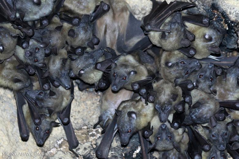 tráfico de vida silvestre coronavirus