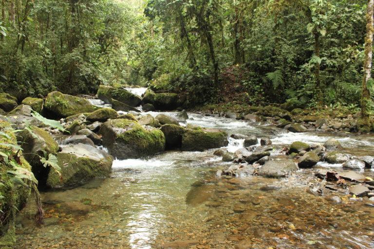 Mineras en áreas naturales protegidas. Bosque Protector Los Cedros. Foto: Elisa Levy.