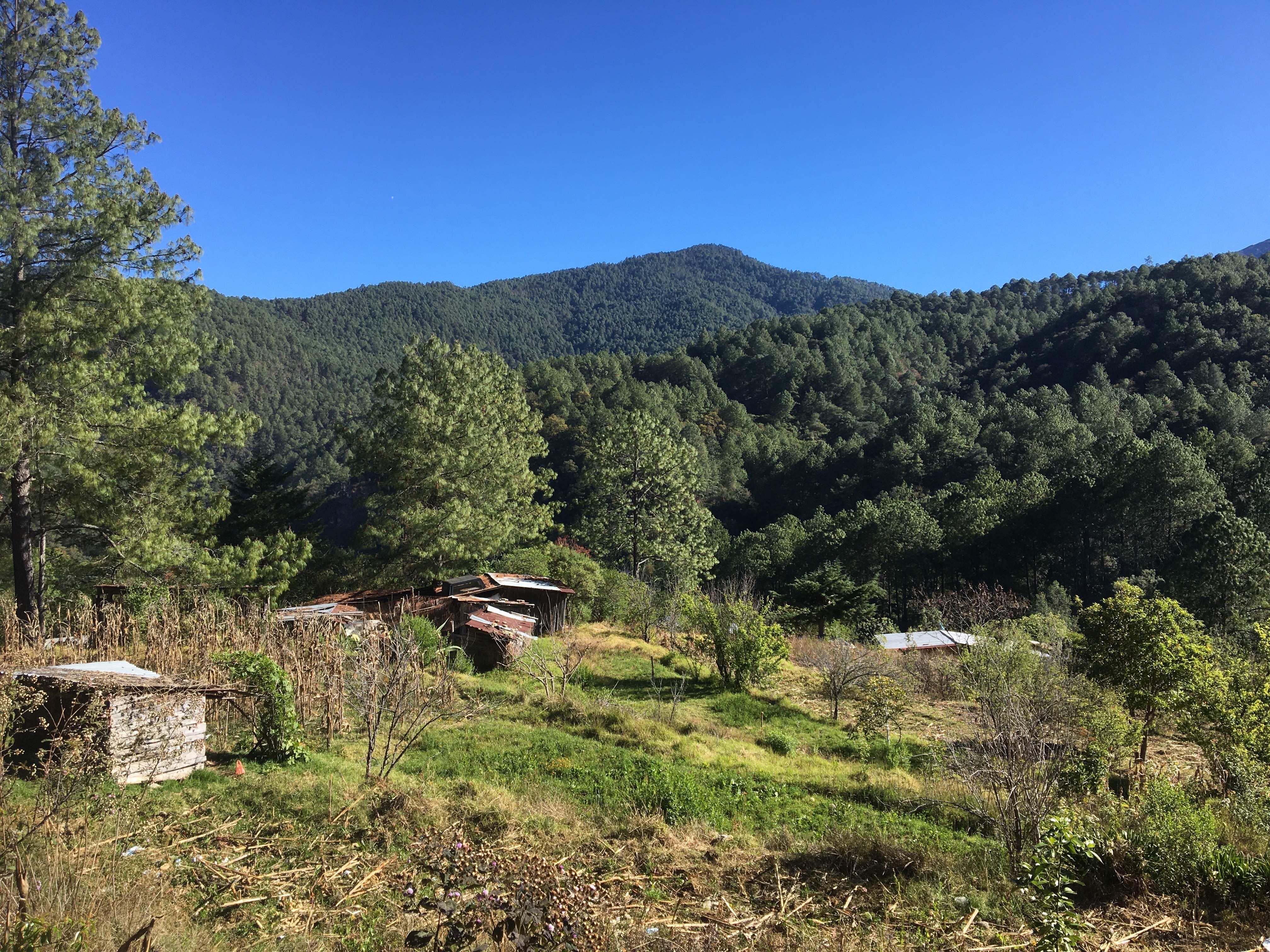 Capulálpam, comunidad forestal