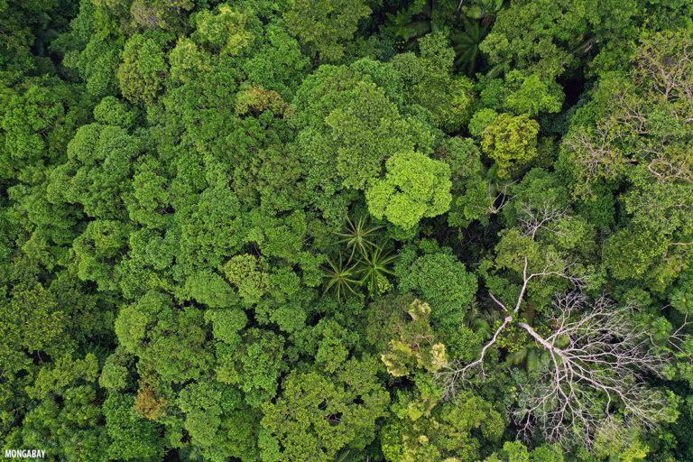 Amazonía colombiana. Foto: Rhett Butler.
