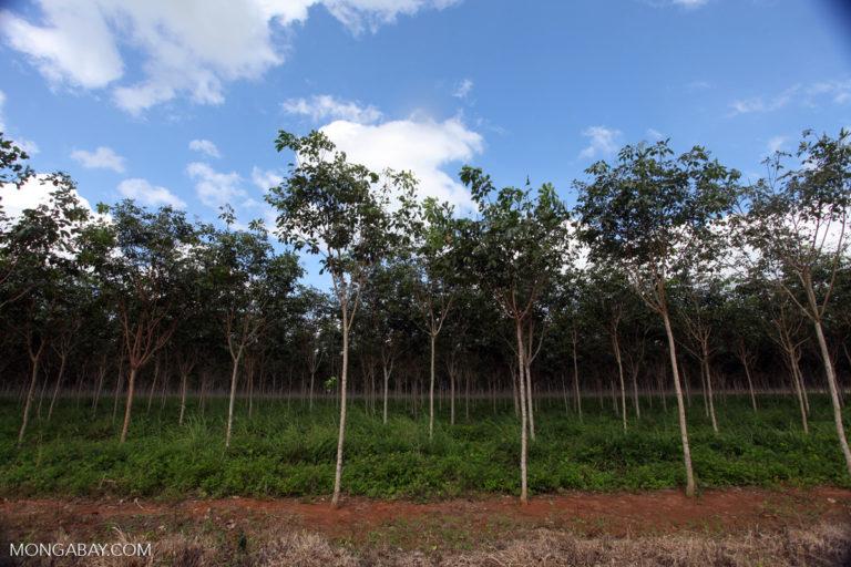 Plantaciones en zona rural de Villavicencio. Foto: Rhett Butler.