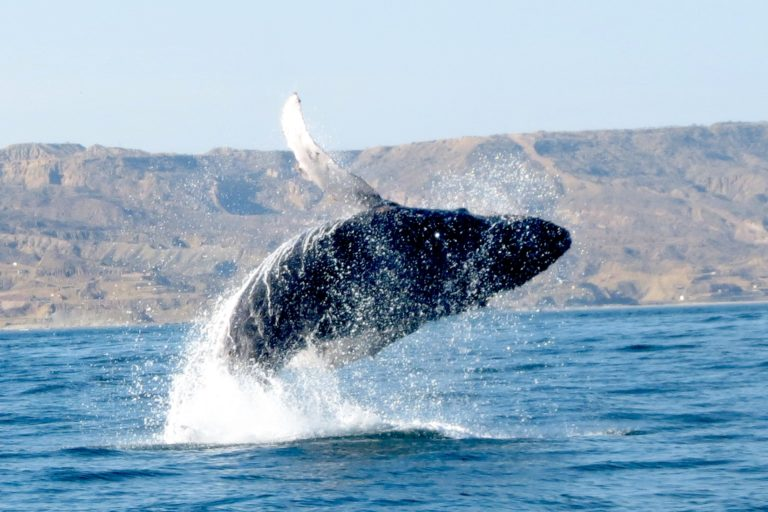 zona de crianza de ballenas jorobadas