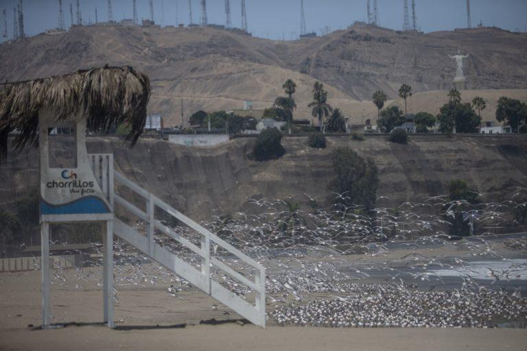 Animales silvestres coronavirus. Así luce la Playa Agua Dulce en Chorrillos, Lima, Perú. Foto: ANDINA/Jhonel Rodríguez Robles.