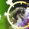 composición a partir de una imagen de una abeja de Colombia. Foto: Cortesía CAR.