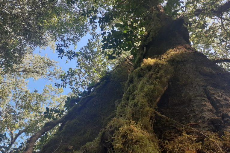 coronavirus La destrucción de los bosques está ocasionando el salto de enfermedades de vida silvestre. Foto: Agustín del Castillo.