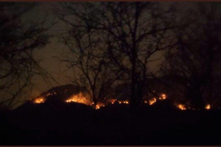 Calidad del aire y coronavirus. La Procuraduría hizo un llamado a las autoridades para evitar que se exploten comercialmente las zonas quemadas. Foto: Procuraduría.