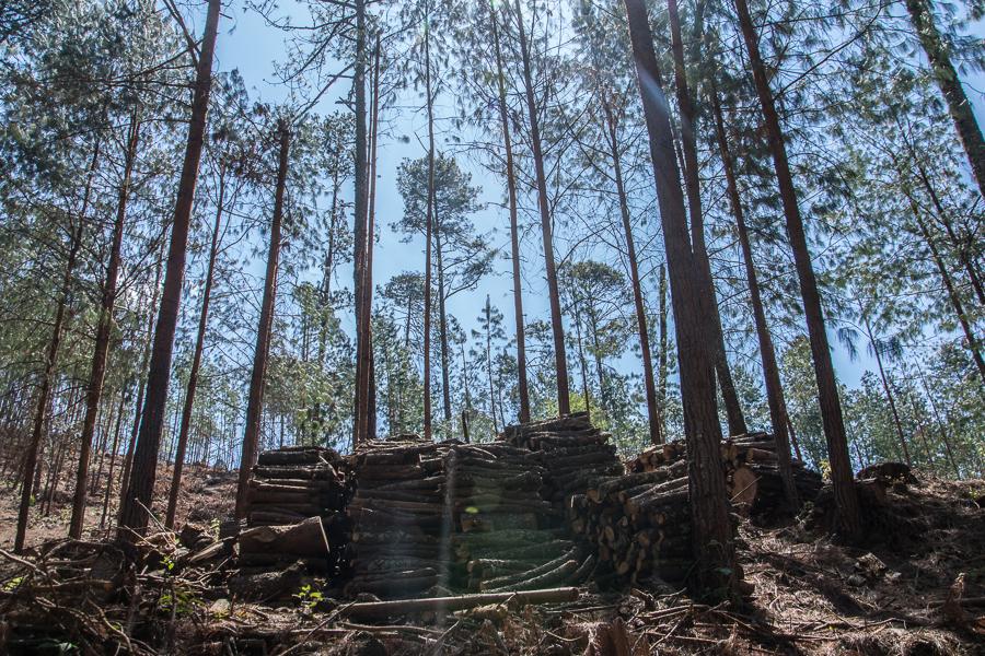 Bosque del Ejido Cruz de Ocote, en Puebla, México. Foto: Marlene Martínez