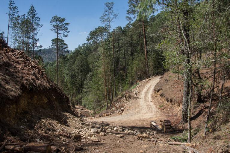 Bosque comunitario de Ejido Cruz de Ocote, Puebla, México. Foto: Marlene Martínez