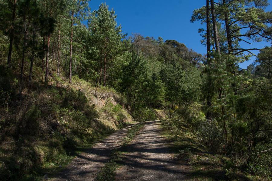 Bosque templado de pinos y encinos en Puebla, México. Foto: Marlene Martínez