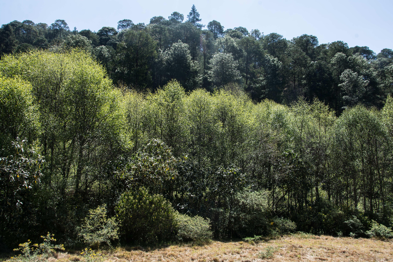 Bosque comunitario del Ejido Cruz de Ocote.