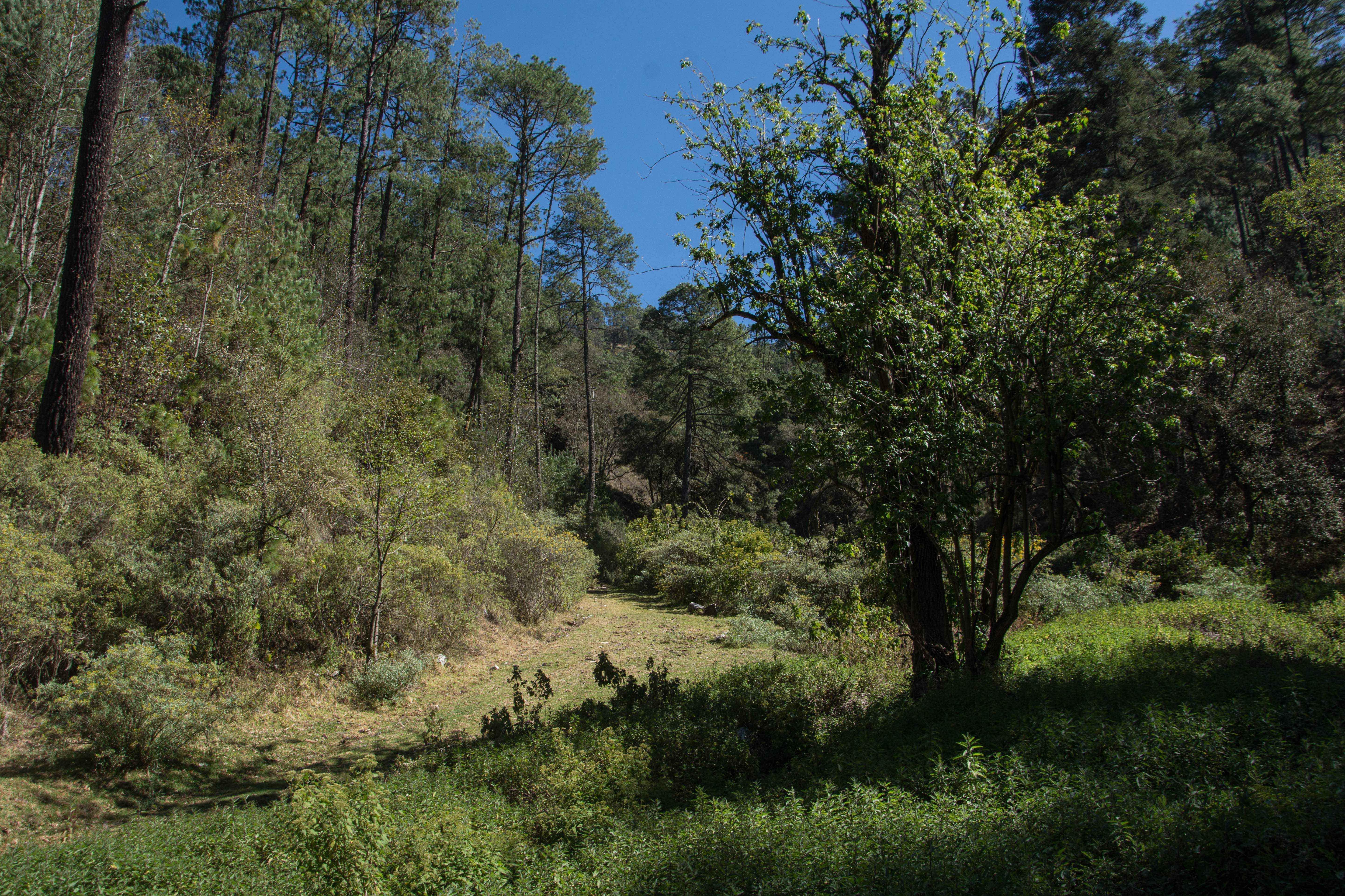 Bosque del Ejido Cruz de Ocote